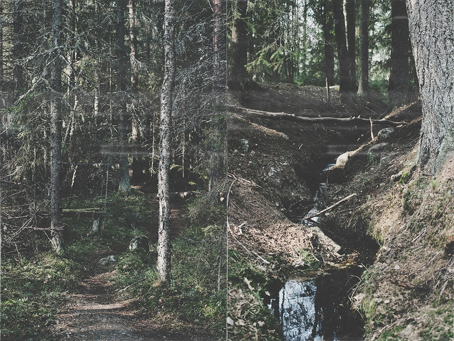 20150412_skog_002