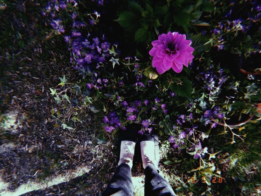 20180528_blommor_110411