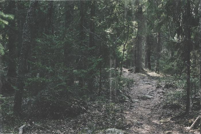 20150412_skog_001
