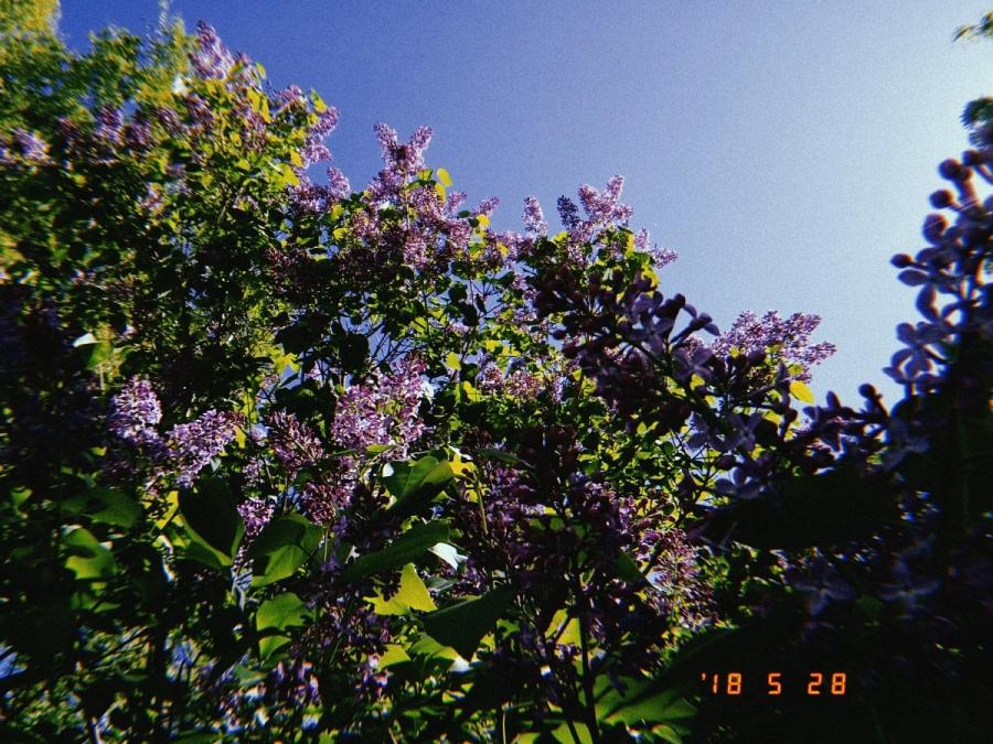 20180528_blommor_110225