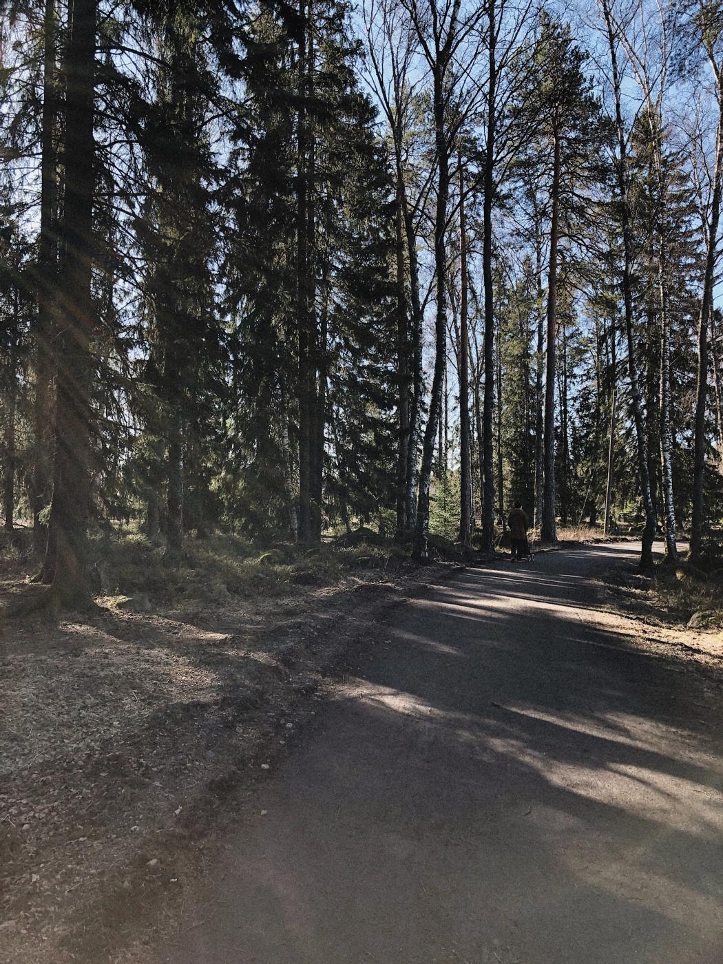 20200409_skog
