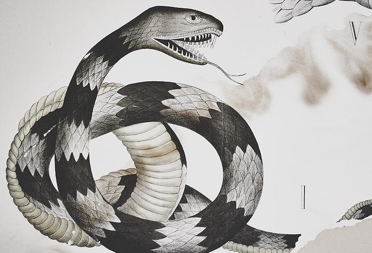 dybdahls zoologiske plancher — engranskning