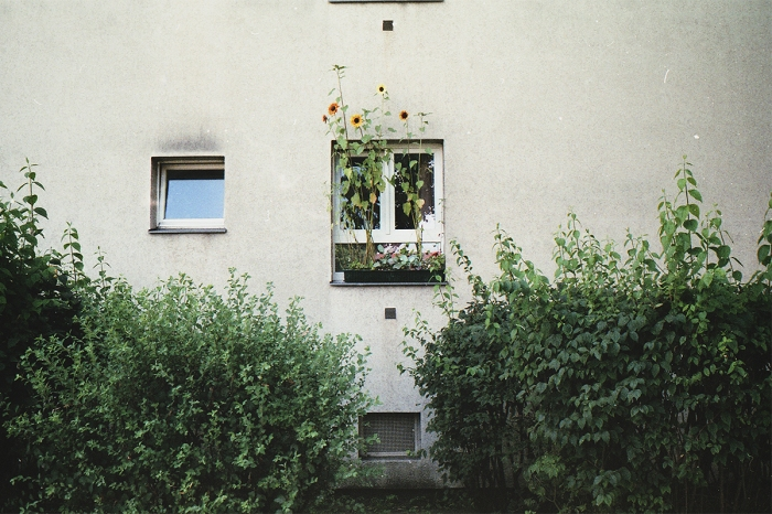 berlin2012_solrosfoenster