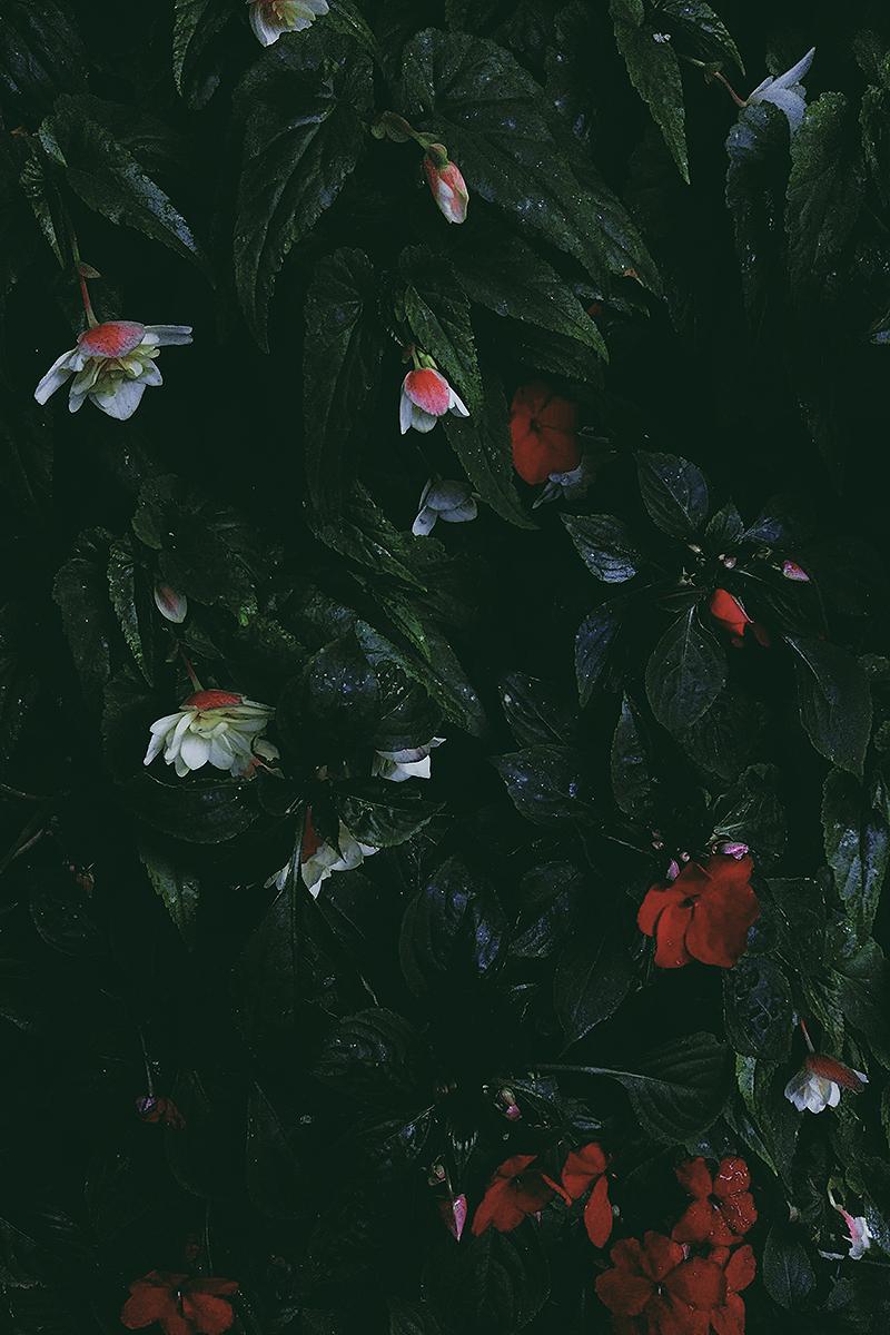 20160914_blomster