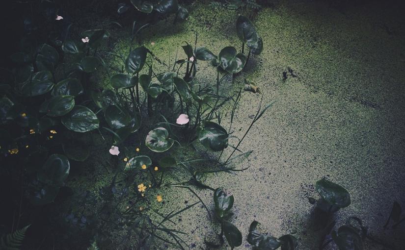 sju sorters blommor i skog och påäng