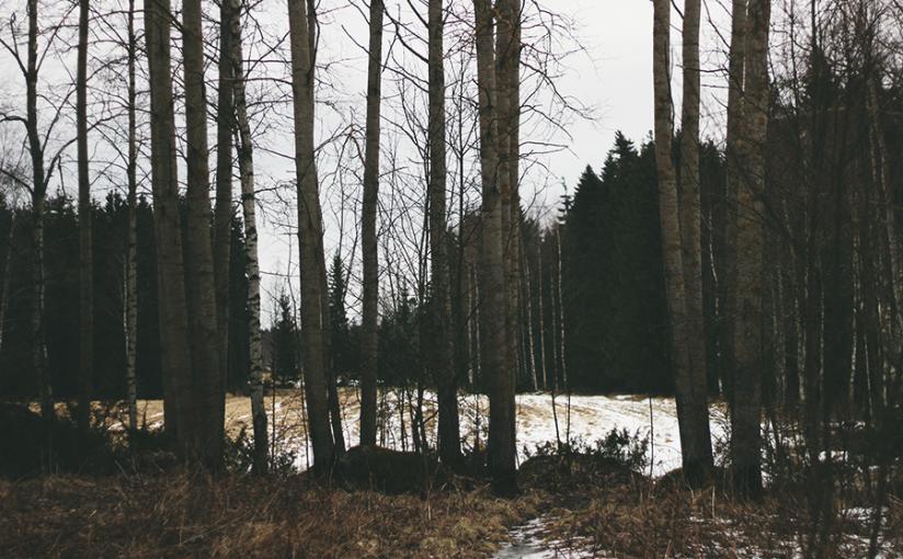 vykort från skogsmulle