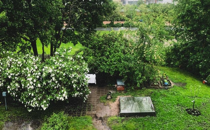 Svalka och regn